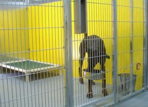Dog Boarding Facilities in New Braunfels, TX