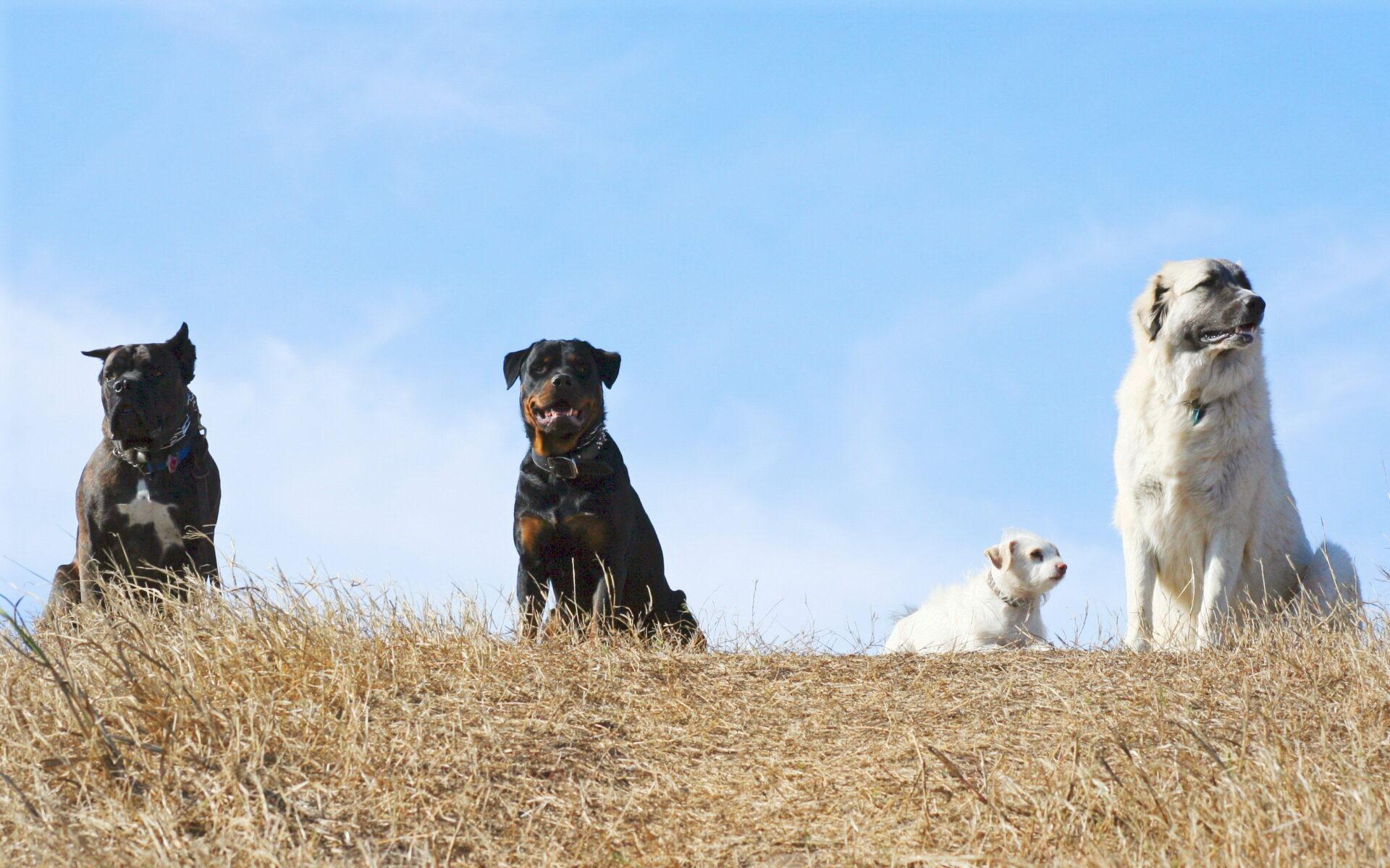 Dog Obedience Classes in San Antonio TX